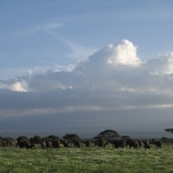 Keenia: Elevantide paradiis Amboseli.