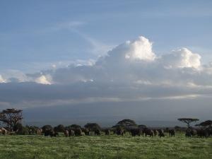 Amboseli – elevantide paradiis.