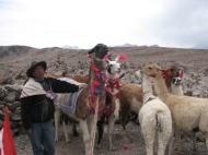 Peruu: Kohalik onu oma laamadega 4800 m kõrgusel.