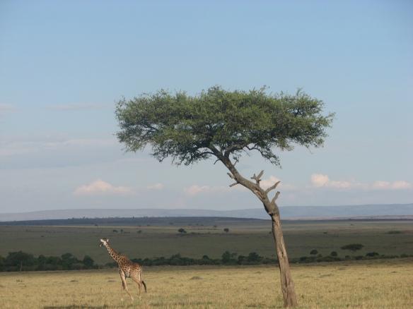 Kaelkirjak Maasai Mara hommikus.