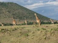Sööma, sööma, sööma Maasai Maras. Seltsis segasem.