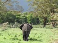 Tansaania: Ja sealt ta meist Ngorongoro kraatris mööda sammus.