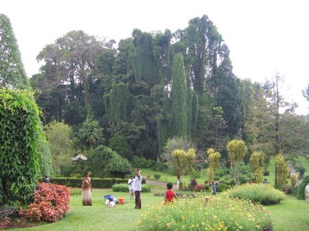 Püha Jalajälje tipus mittekäinuna pole mul sellest ka pilti. Aga rohelisse lopsakusse mattuv eksootiline botaanikaaed Kandy linnas on ka uudistamist väärt.