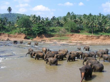 Pinnawela elevantide orbudekodu asukad jões mõnulemas.