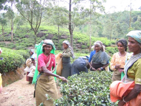 Tamili naised teelehti noppimas.