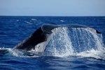 foto: Conservation Internationali FB lehelt.