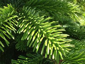 foto: www.brighthealing.com.
