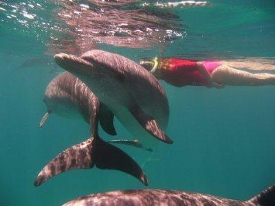 Angeelika Hawaiil – delfiinide poolt tingimusteta omaks võetud.